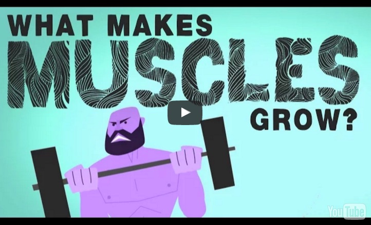 What_makes_muscles_grow